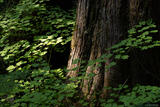 Forest Light print