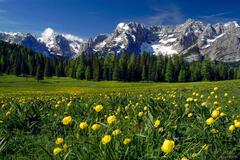 wildflowers, Sorapis, Lago Misurina, Dolomites, Italy