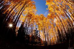 McClure Pass, aspen, fisheye, Colorado