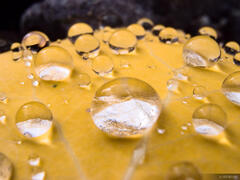 Aspen Raindrops, Colorado