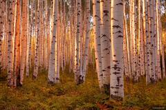 McClure Pass, Colorado, Marble, aspens, sunset, September