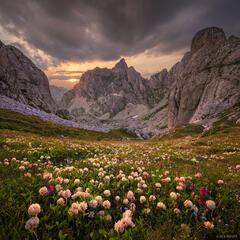 Bobotov Kuk,Dinaric Alps,Durmitor National Park,Montenegro,wildflowers