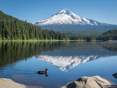 Mount Hood, Oregon, Trillium Lake, duck
