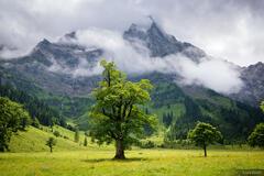 Austria, Engalm, Karwendel, Alps, Spritzkarspitze, Engtal, Eng Alm, maple tree