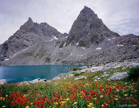 wildflowers, Peak Lake, Stroud Peak, Wind River Range, Wyoming