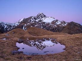 Xenicus, Harris Saddle, Routeburn, New Zealand