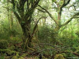 Rainforest, Milford Track, Fiordland, New Zealand