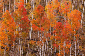 Dallas Divide, Sneffels Range, San Juan Mountains, Colorado, autumn, aspens