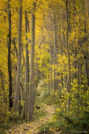 Colorado,san juan mountains, aspens, trail