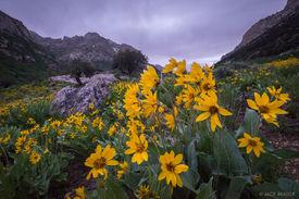 Lamoille Canyon Flowers