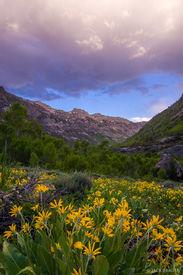 Lamoille Canyon Sunset