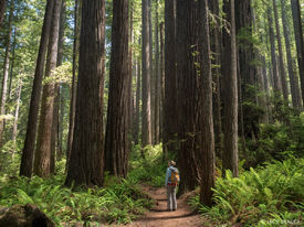 California, Prairie Creek Redwoods State Park, redwoods, hiking