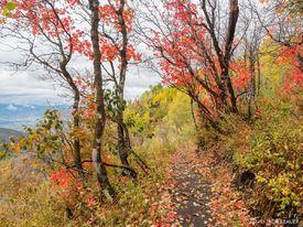 Trail Through Red Oak