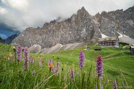 Falkenhütte Flowers