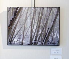 Aspen Snow Beams, print