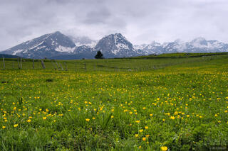 Durmitor Yellow
