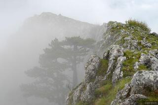 fog, Tara Canyon, Montenegro