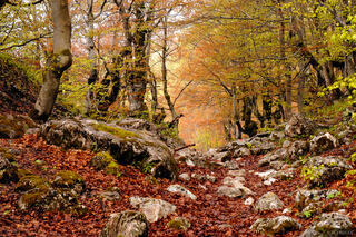 forest, Bobotov Kuk, Durmitor National Park, Montenegro