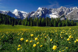 Misurina Wildflowers