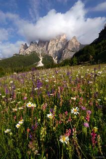 Catinaccio, wildflowers, Canazei, Dolomites, Italy