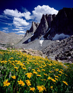 Warbonnet Peak, wildflowers, Cirque of the Towers, Wind River Range, Wyoming