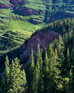 Pine forest, Elk Mountains, Colorado, Maroon Bells-Snowmass Wilderness