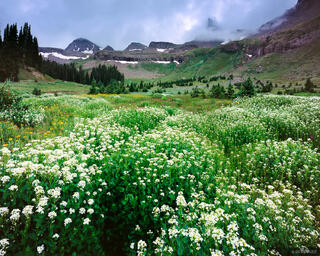 Coxcomb Peak, wildflowers, Uncompahgre Wilderness, Colorado