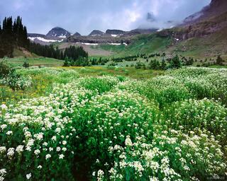 Coxcomb Peak, wildflowers, Uncompahgre Wilderness, Colorado