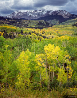 Fall Creek, aspens, Dolores Peak, Telluride, Colorado