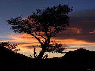 Lenga, tree, silhouette