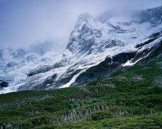 Paine Grande and Lenga Forest