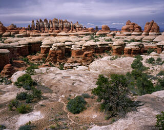Elephant Canyon, Needles District, Canyonlands National Park, Utah