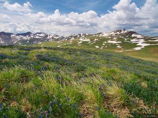 American Flats, tundra