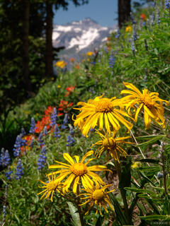 Wildflowers, Teakettle Mountain, San Juan Mountains, Colorado