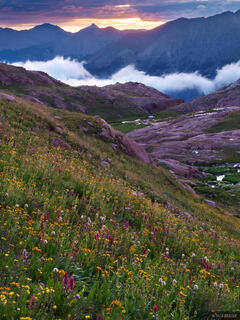 Weminuche Wilderness, wildflowers, Colorado