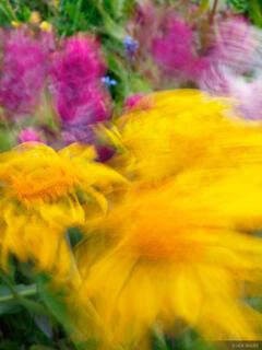 windy, wildflowers, Weminuche Wilderness, Colorado