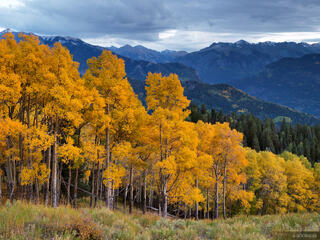Colorado, aspens, September