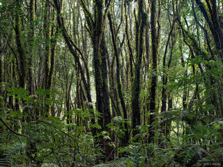 Rainforest, West Coast, New Zealand