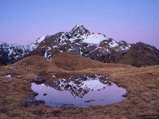 Xenicus, Harris Saddle, Routeburn, New Zealand
