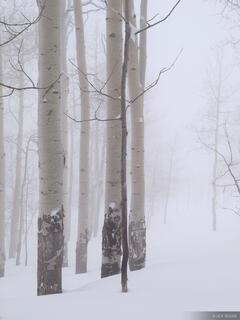 aspens, foggy, San Juans, Colorado