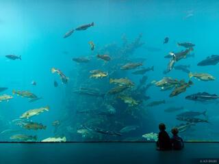 Atlanterhavsparken Aquarium, Ålesund, Norway