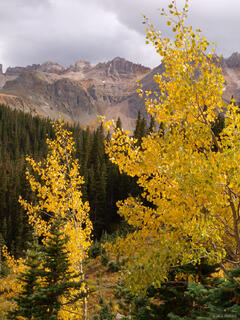aspen, autumn, yellow, Sneffels Range, Colorado