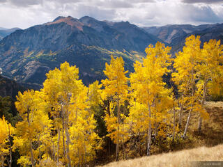 aspens, Ouray, San Juan Mountains, Colorado, September