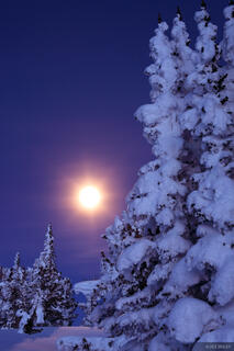 snow, snowy, moon, trees, wyoming
