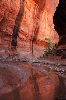 Escalante, Utah, canyon, Grand Staircase-Escalante National Monument