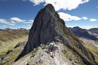 Cordillera Huayhuash, Peru, arriero, burros