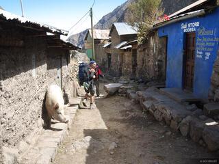 Huayllapa Pig