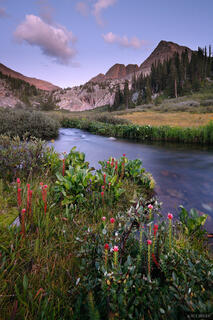 Vestal Creek, wildflowers, San Juan Mountains, Colorado, Trinity Peaks