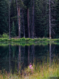 Beaver Ponds, Weminuche Wilderness, Colorado