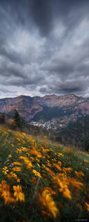 Ouray, Colorado, wildflowers, windblown, clouds